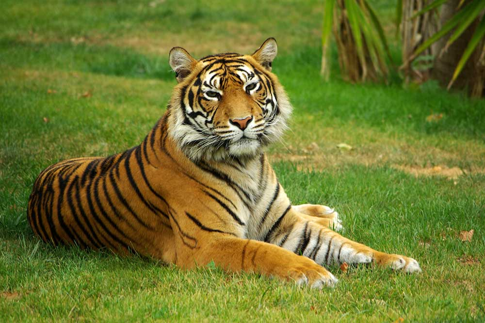 Spirit-of-India--Wild-Tiger's-Tale-trunblocked-travel-retail-news