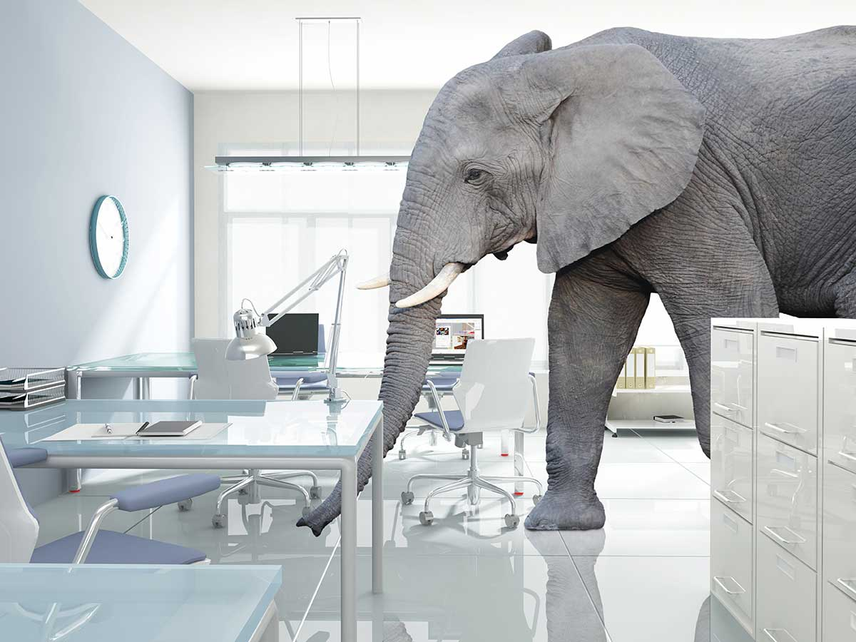 Revealed-Why-Flying-Elephants-Love-Airport-Architects-trunblocked